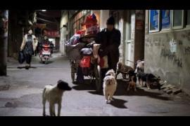 """大陸新聞解讀527期_嚴真點評:北京紅黃藍幼兒園虐童與清理""""低端人口""""事件"""